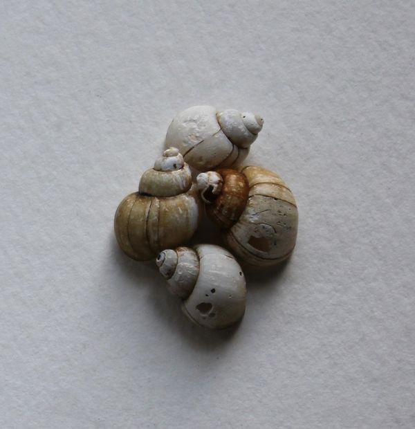 tinyshells